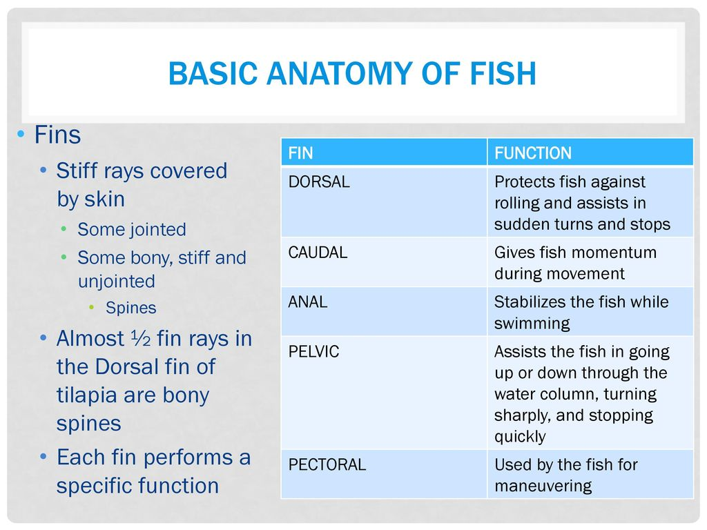 Aquaponics FISH HEALTH REF: Fish Health. - ppt download