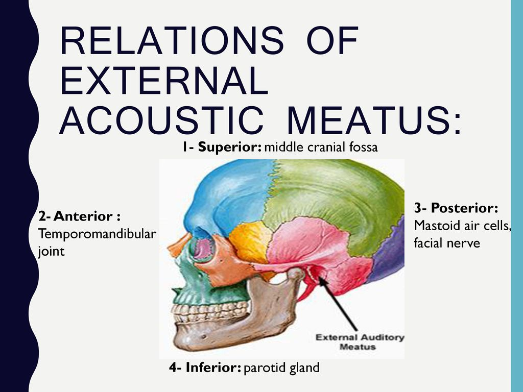 Ear Anatomy and physiology - ppt download