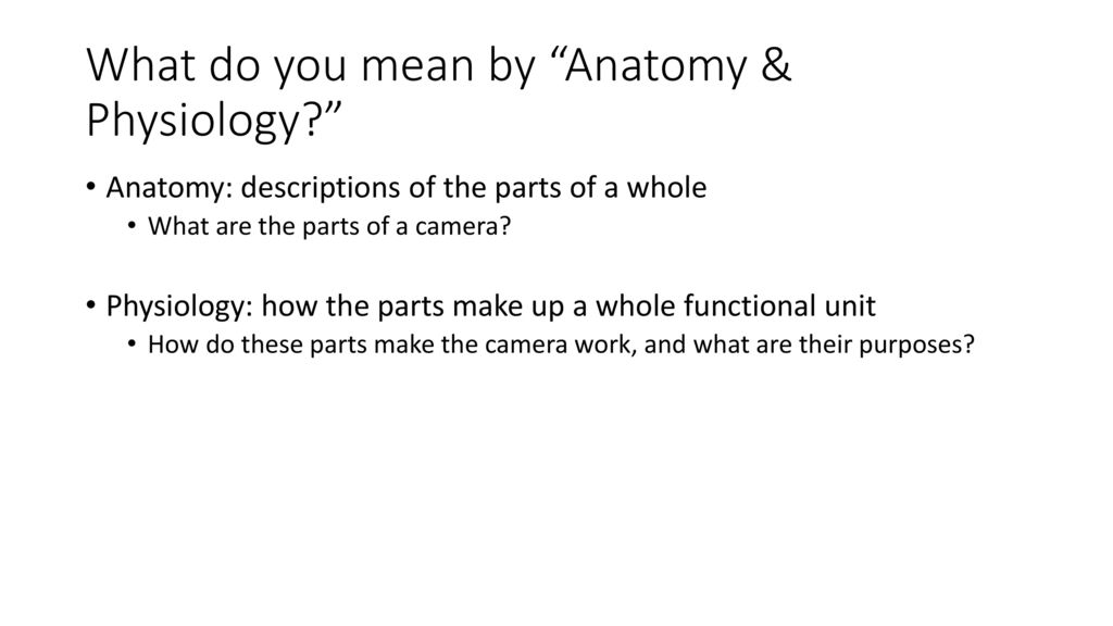 Anatomy Physiology Of A Camera Ppt Download