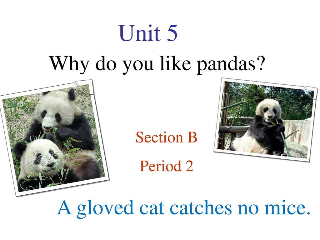 Unit 5 Why do you like pandas? A gloved cat catches no mice