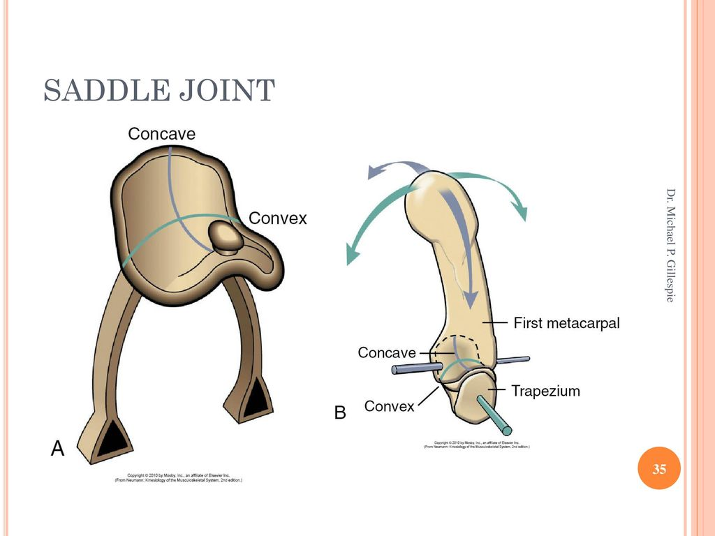 Awe Inspiring Joints Ppt Download Wiring Cloud Hisonuggs Outletorg