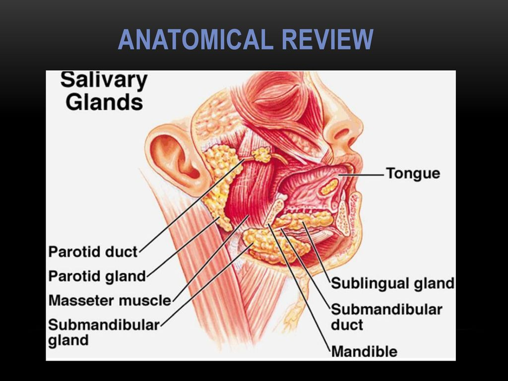 Diagnosis and treatment of Salivary gland diseases, Halitosis - ppt ...