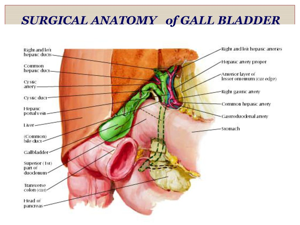 LAPAROSCOPIC CHOLECYSTECTOMY - ppt download