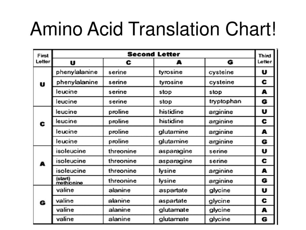 15 Amino Acid Translation Chart