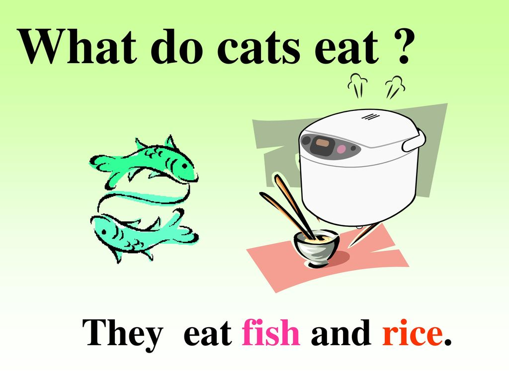 What do cats eat ? They eat … 2A : Unit ppt download
