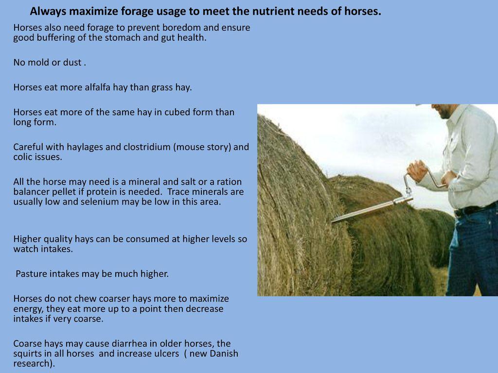 Feeding horses –horses need nutrients –feeds supply nutrients - ppt