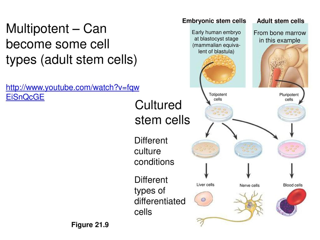 clips-hardcore-adult-stem-cell-production-of-twins