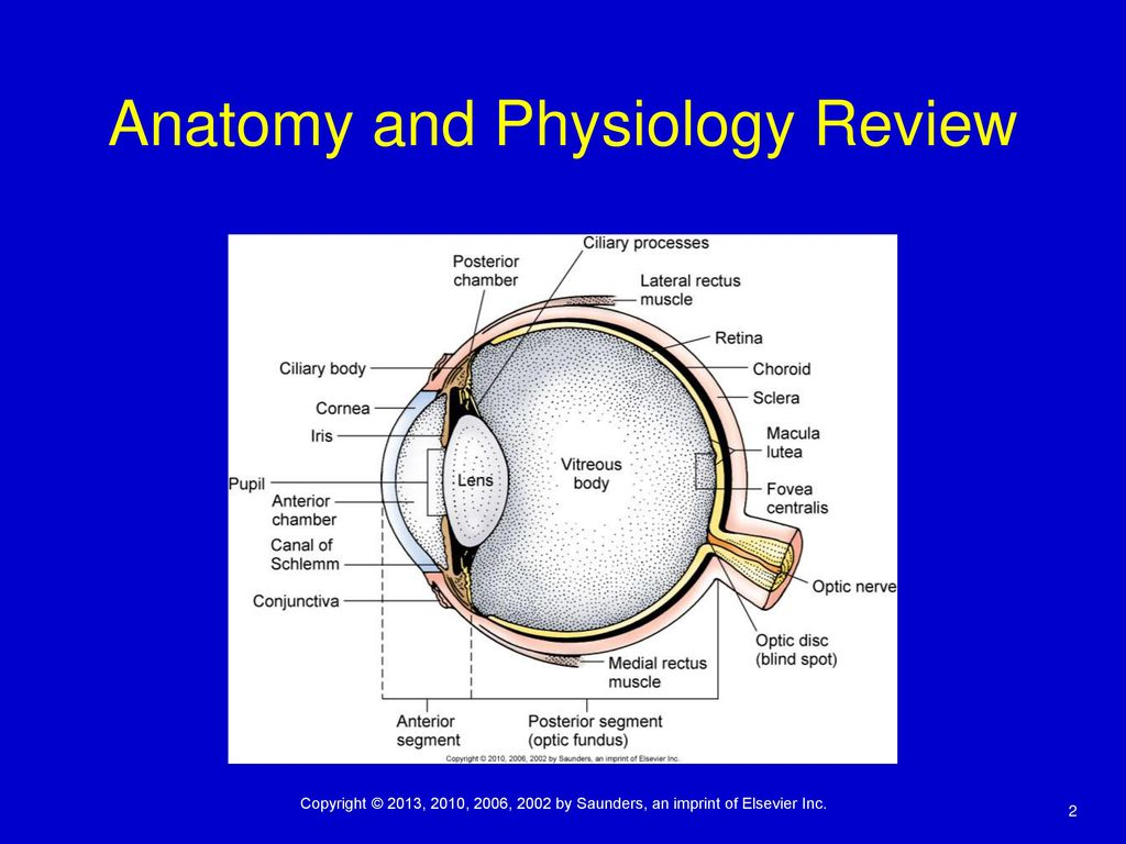Assessment of the Eye and Vision - ppt download