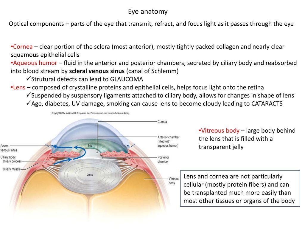 Awesome Anatomy And Physiology Of Eye Illustration Human Anatomy
