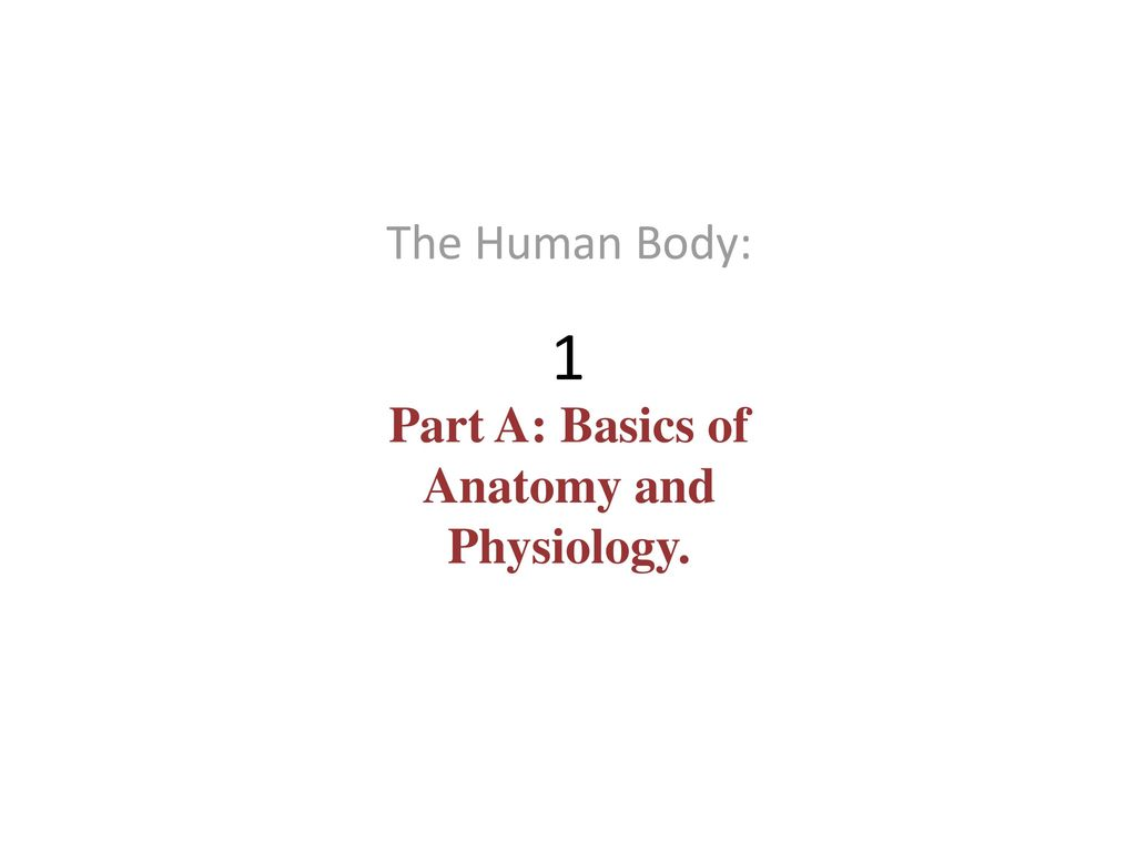 The Human Body: Part A: Basics of Anatomy and Physiology. - ppt download