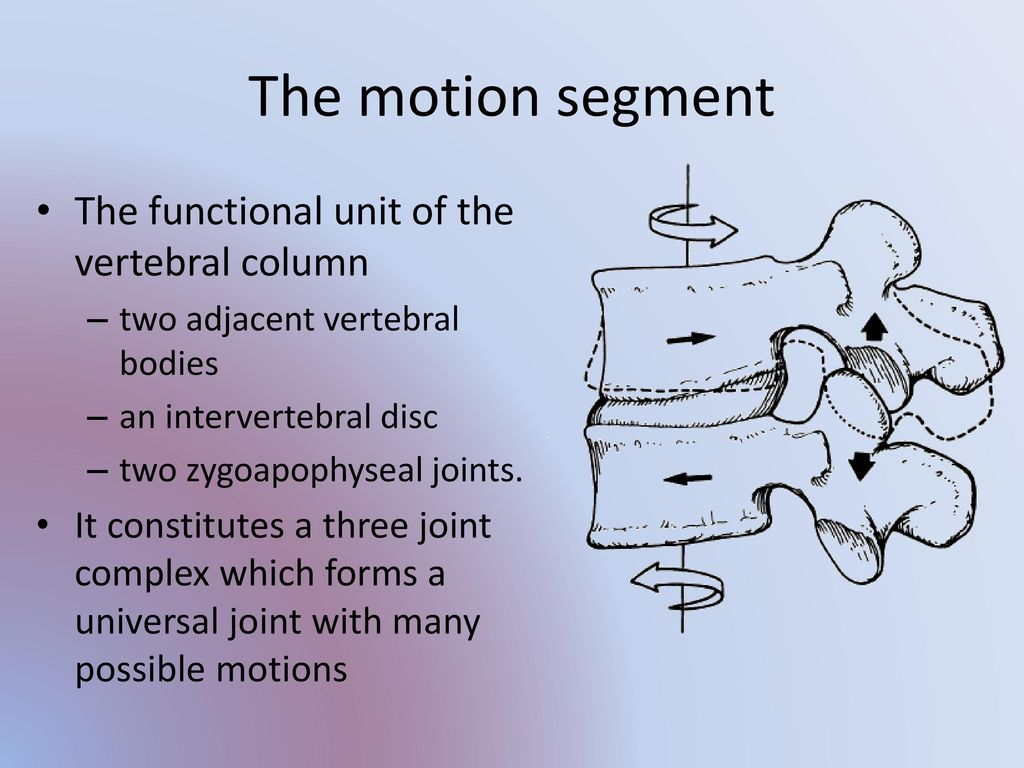Anatomy And Physiology Of The Facet Joints Ppt Download