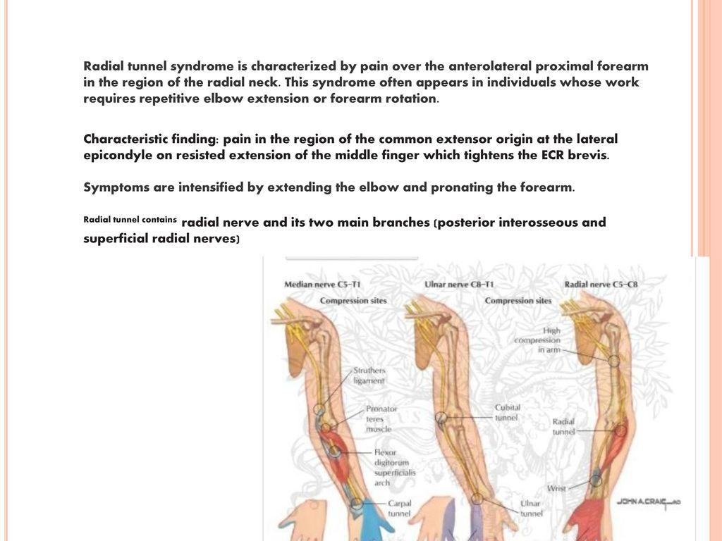 Peripheral Nervous System Ppt Download