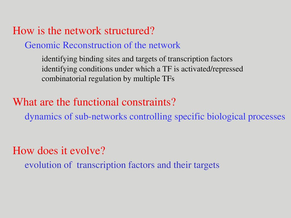 Yeast Transcription Networks: Structure, Dynamics, and