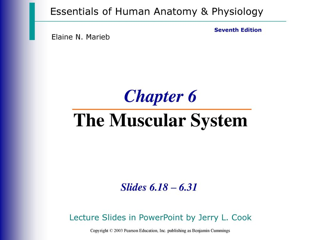 Beautiful Essentials Of Human Anatomy And Physiology Powerpoints ...