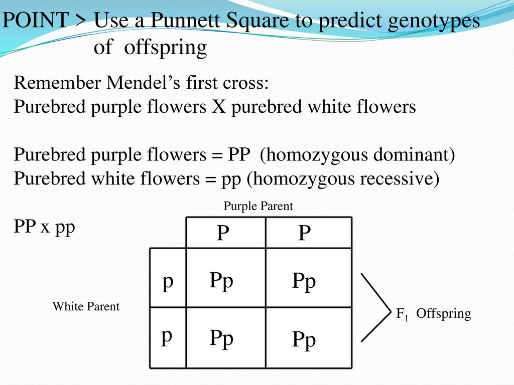 42 Probability And Genetics Ppt Download