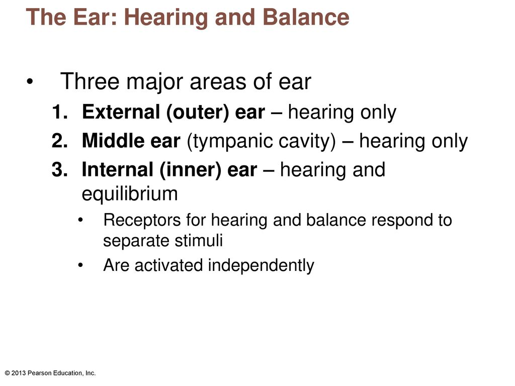 Anatomy and Physiology of Hearing - ppt download
