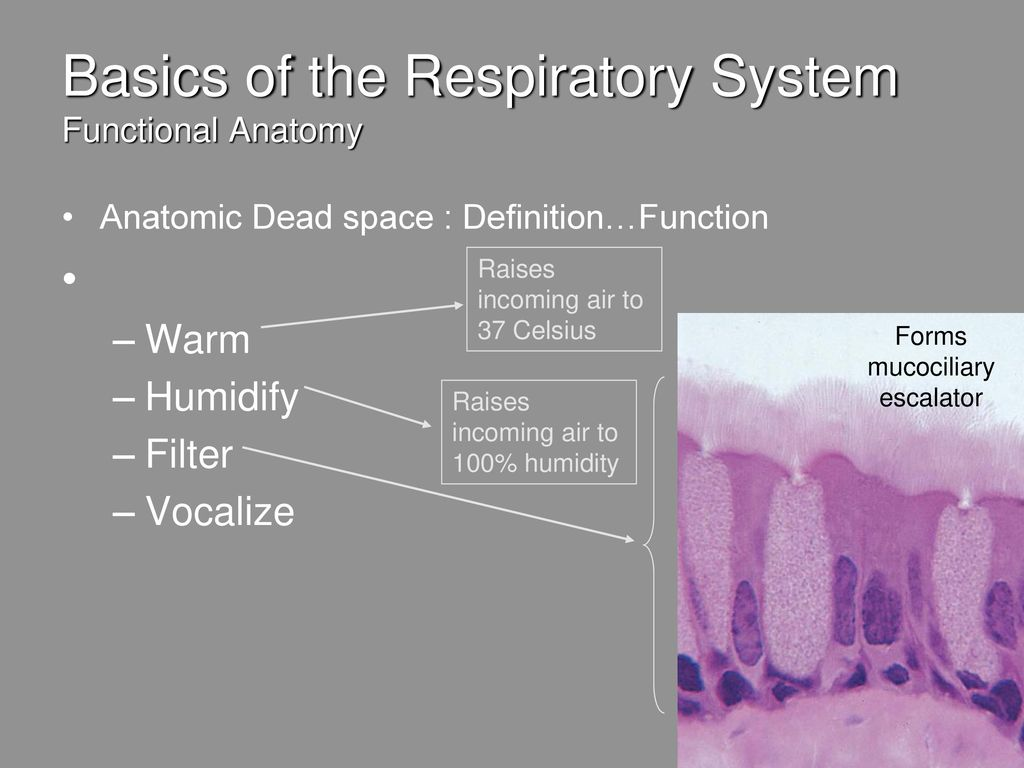 Respiratory Physiology - ppt download