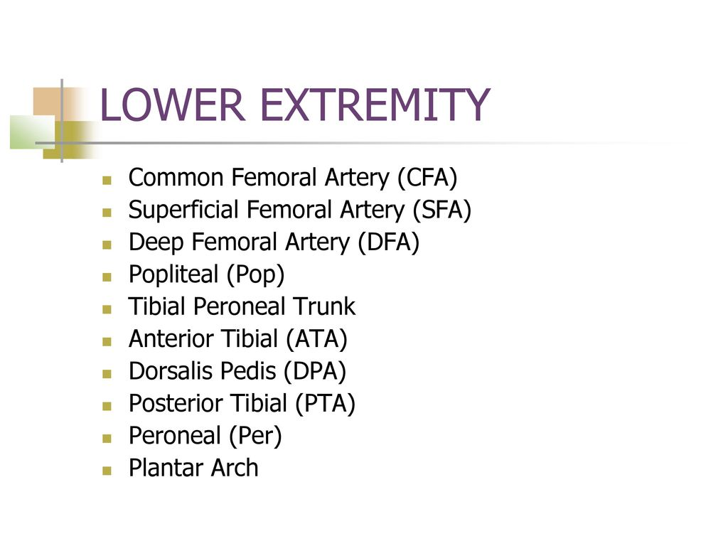 EXTREMITY ARTERIAL ANATOMY - ppt download