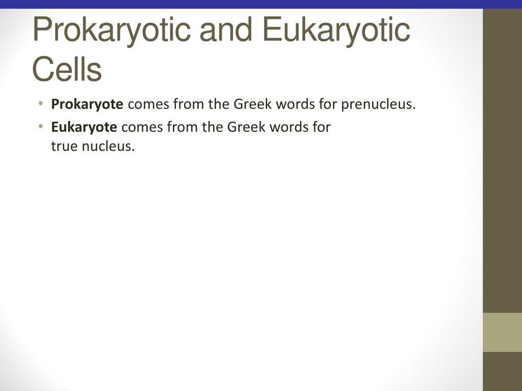 Functional Anatomy of Prokaryotic and Eukaryotic Cells - ppt download