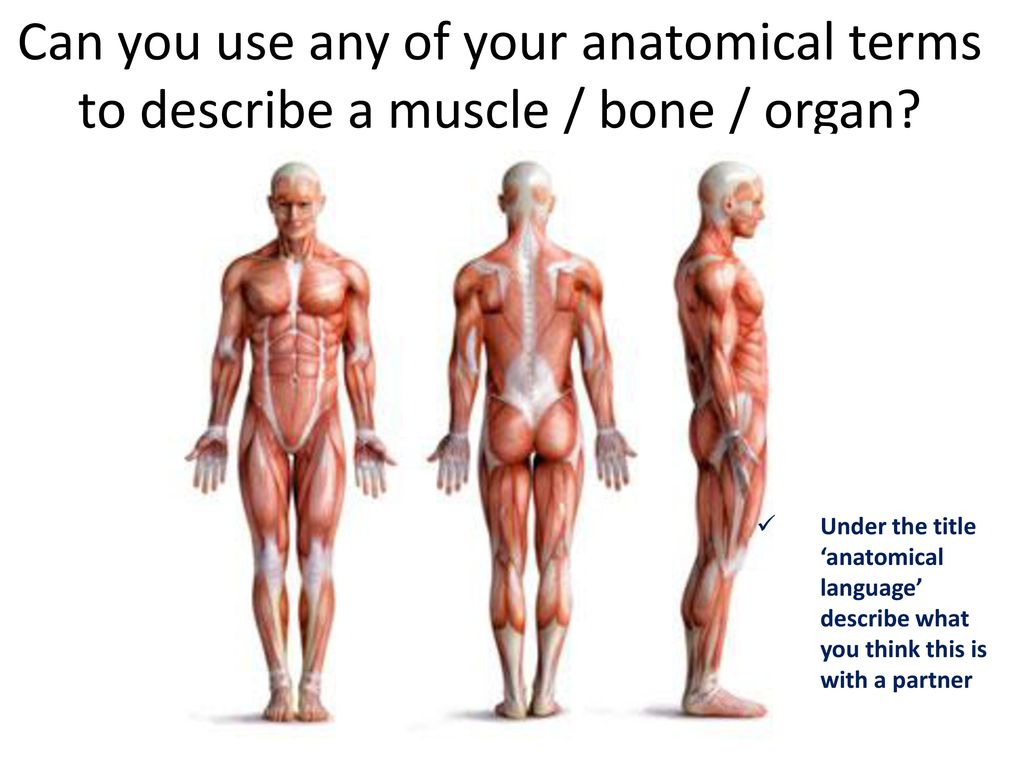 Anatomical Standing Position: When describing the regions of the ...