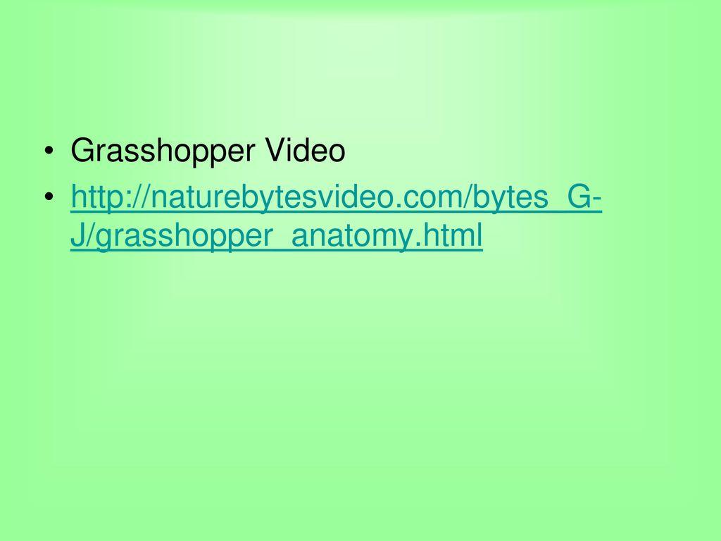 Grasshopper Anatomy Functions Choice Image - human anatomy diagram ...