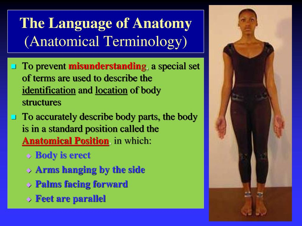 Perfect Anatomy Terms Of Location Gallery - Anatomy and Physiology ...