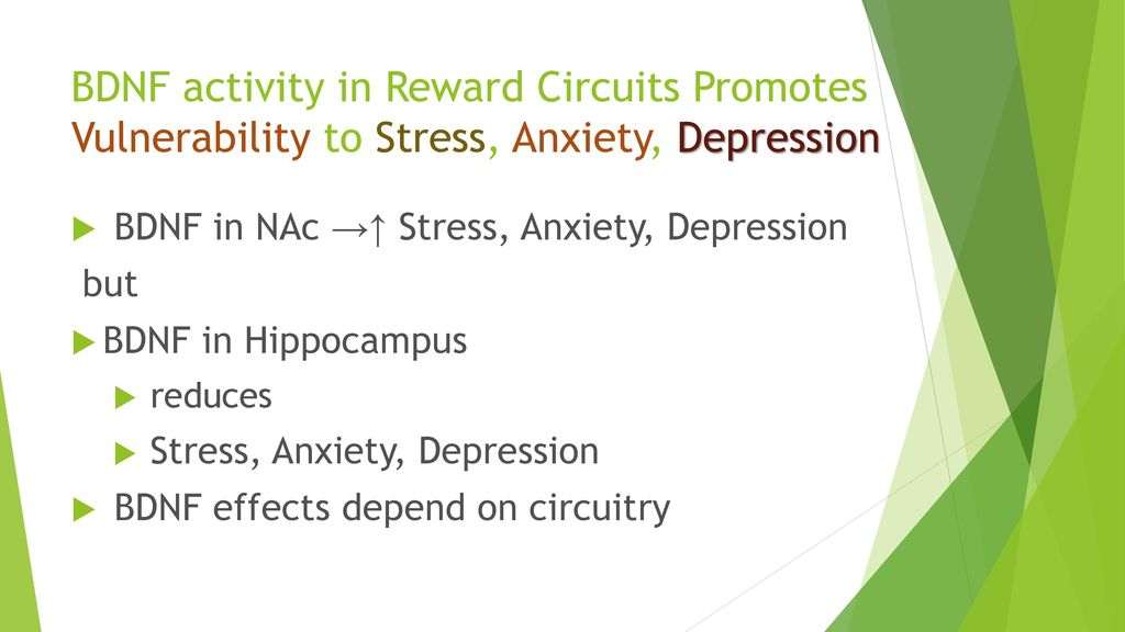 Introduction to Social Stress Resilience - ppt download