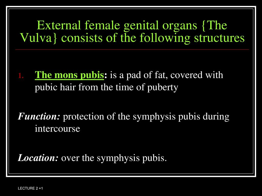 Anatomy of female reproductive system consists of: - ppt download