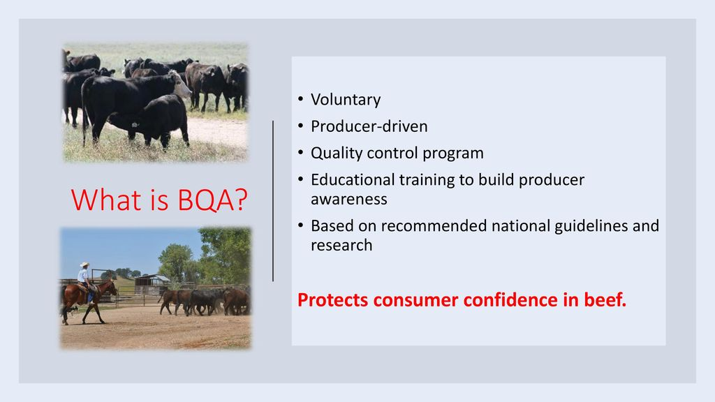 Beef Quality Assurance Certification - ppt download