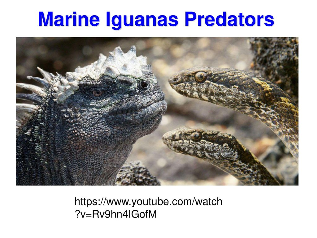 009a Marine Reptiles. - ppt download