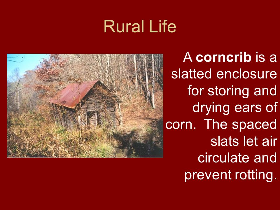 Rural Life A corncrib is a slatted enclosure for storing and drying ears of corn.