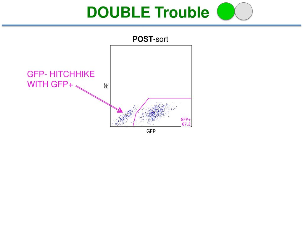 DOUBLE Trouble POST-sort GFP- HITCHHIKE WITH GFP+ 14