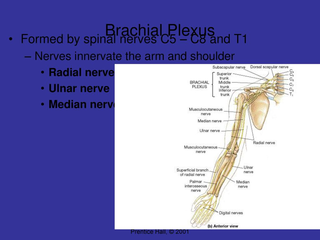 Introduction to Central Nervous System - ppt download