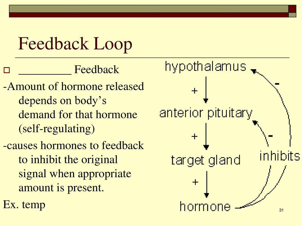 feedback system hormoner