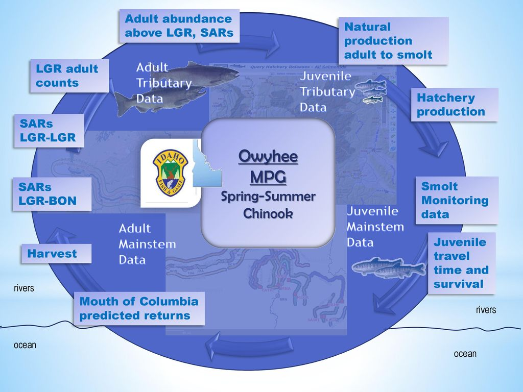 MPG Spring-Summer Chinook - ppt download