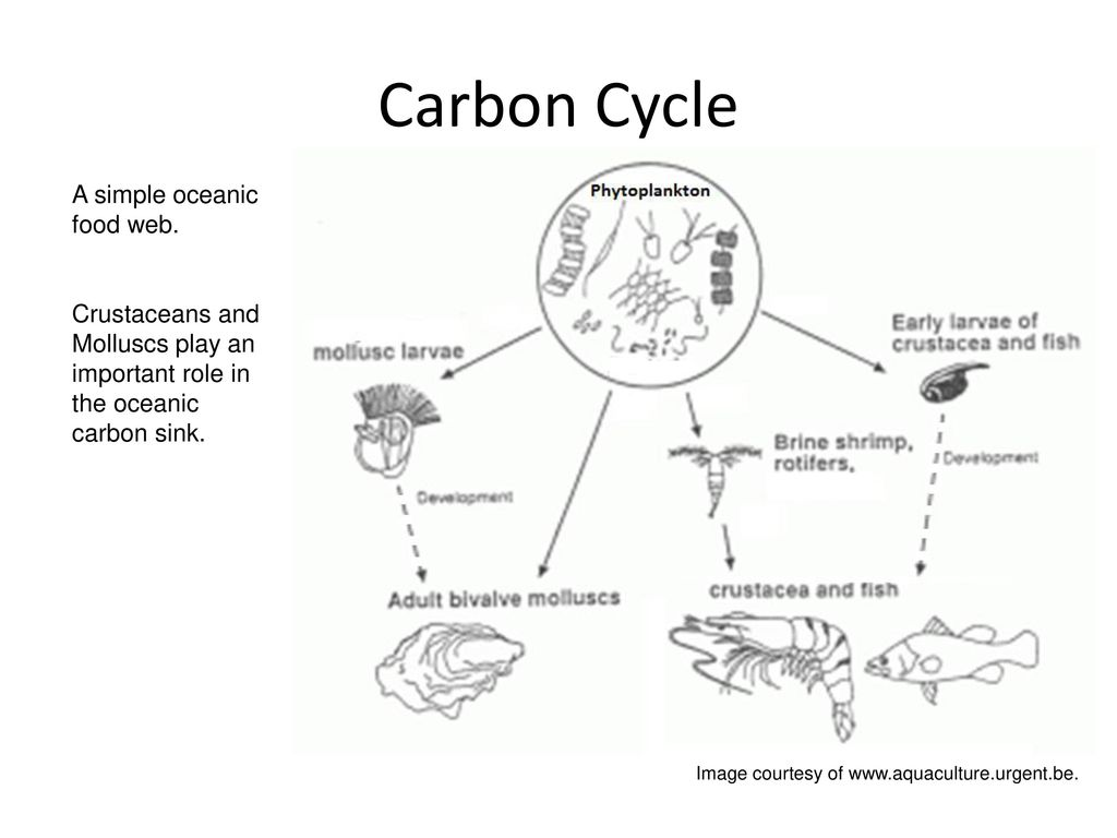Definition of Carbon-date at