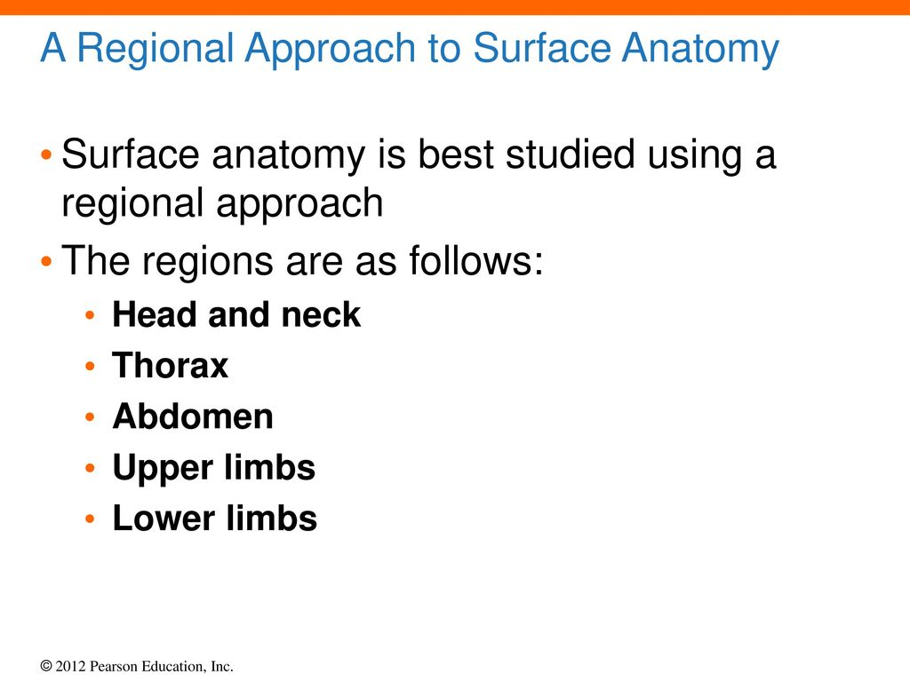 12 Surface Anatomy and Cross-Sectional Anatomy - ppt download