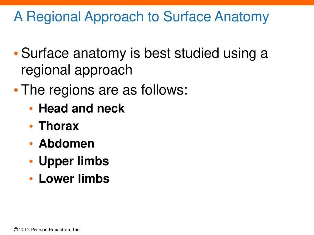 Surface Anatomy Thorax Choice Image - human anatomy diagram organs