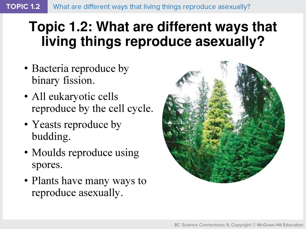 Asexual reproduction through budding takes place in eukaryotic cell