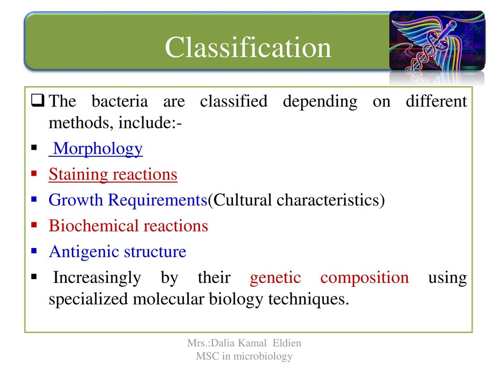 Classification of bacteria - ppt download