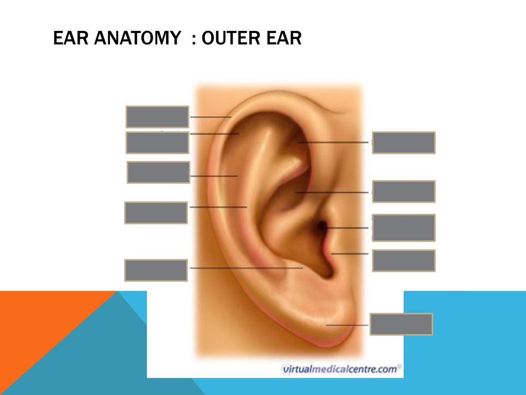 ENT: Ears Module 7 OSCE Revision. - ppt download