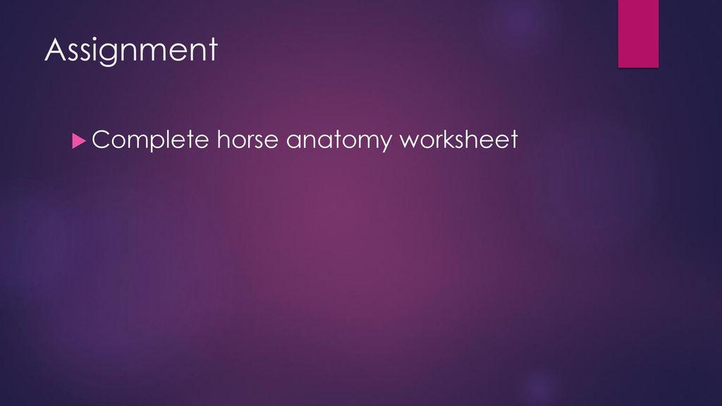 External Anatomy Standard Understand equine anatomy - ppt download
