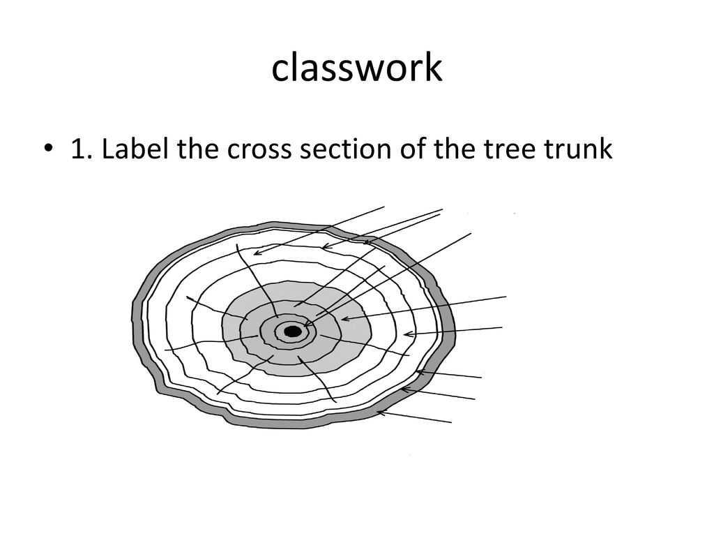 Parts Of The Tree Grade Ppt Download