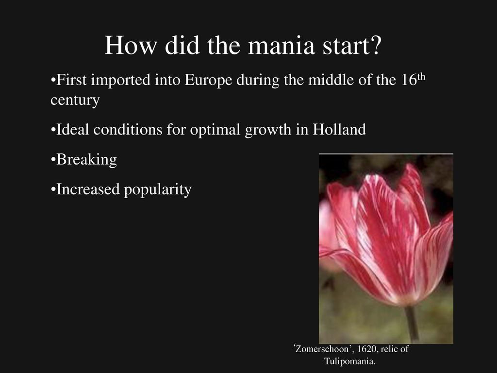 Tulip Mania History