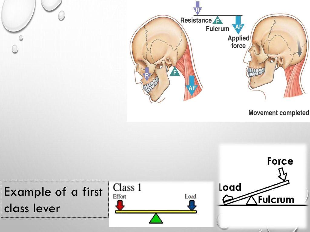 Biomechanics levers. - ppt download