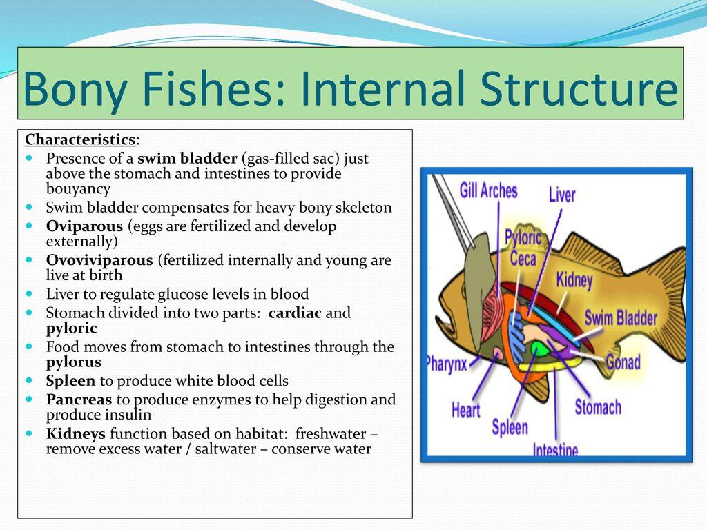 Fine Fish Anatomy Internal Mold Anatomy And Physiology Tissue