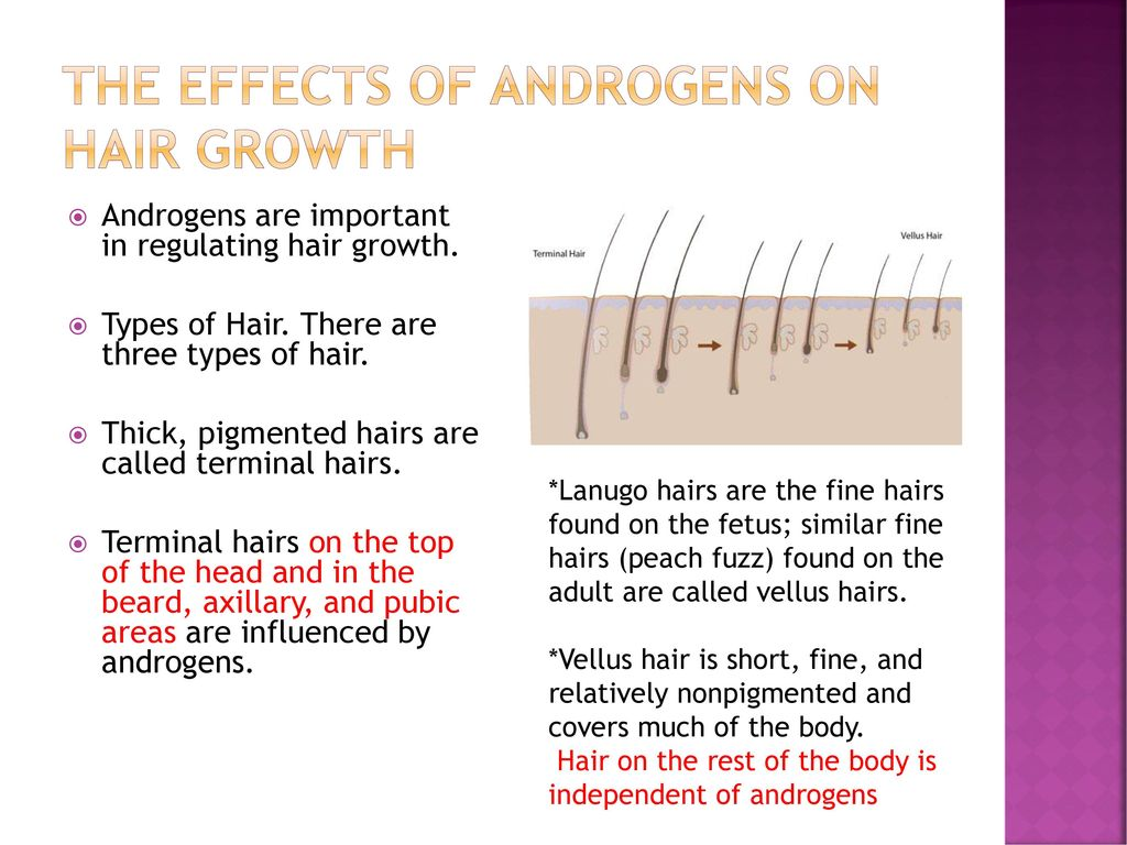 ANDROGENETIC ALOPEcIA - ppt download
