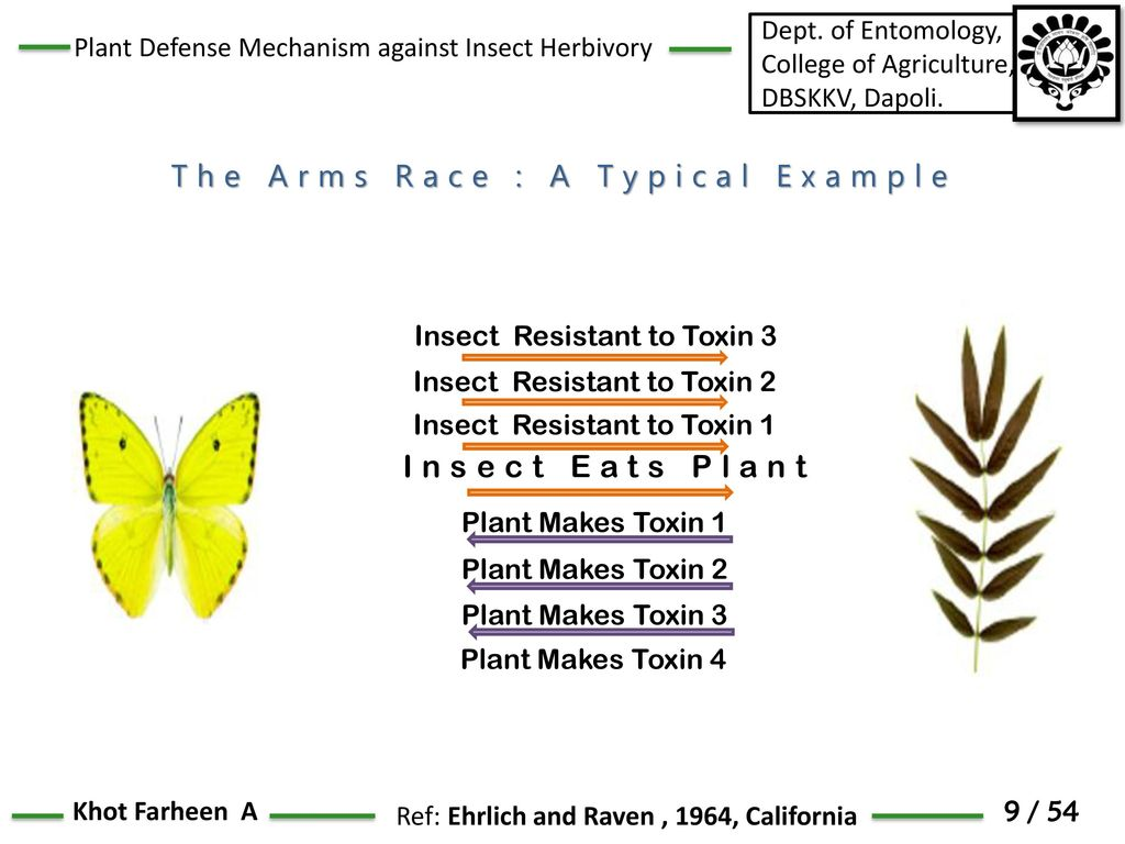 Plant Defense Response Against Insect Herbivory Ppt Download