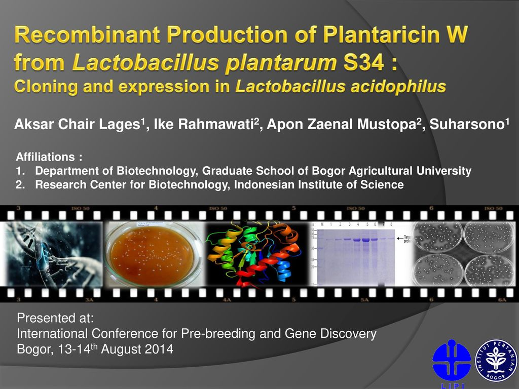 Cloning and expression in Lactobacillus acidophilus - ppt download