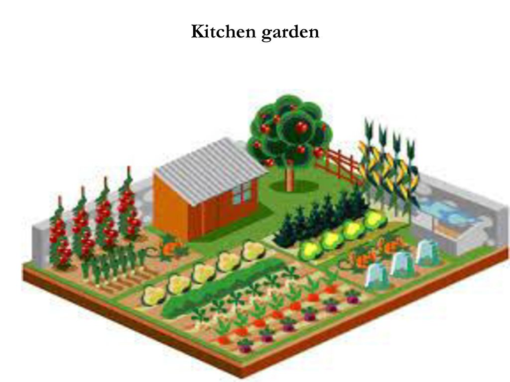 Importance Of Vegetable Farming Ppt Download
